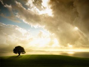Solitary-tree